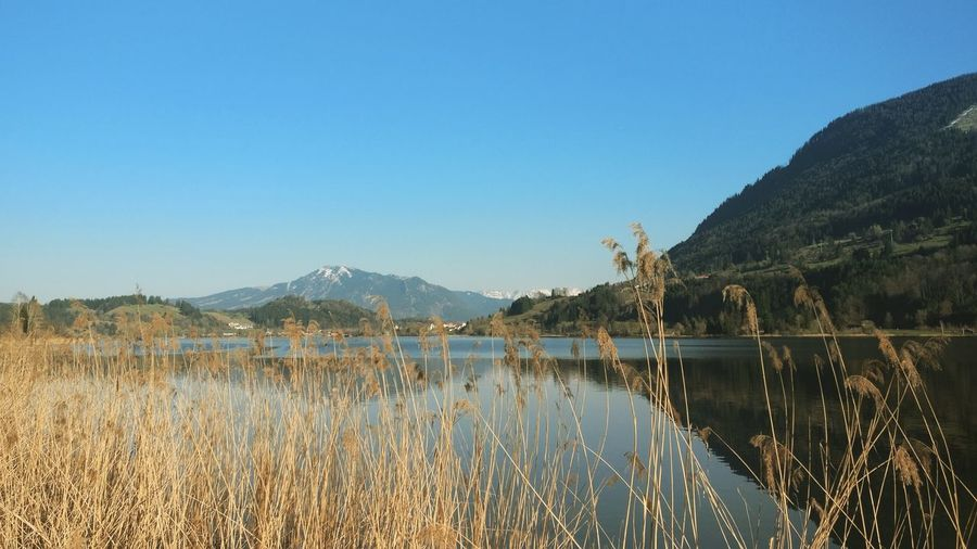 Alpsee Immenstadt Bühl Allgaeu Allgäu Water Mountain Tree Clear Sky Lake Sky