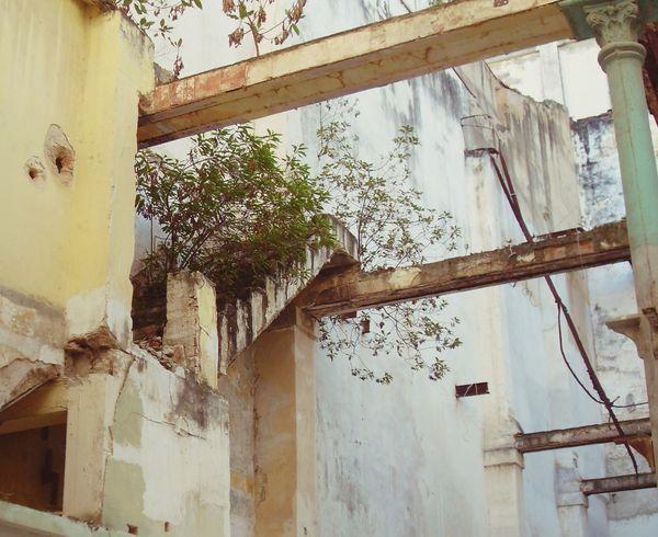 Treppe ins Nichts. Cuba Havanna, Cuba Architecture Damaged Ruins Architecture Ruins No People Old Steps Tree House Built Structure