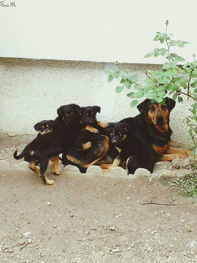 Mother's day today at France so.. happy mothers day!!!! Mother's Day 2016 Taking Photos Puppies Mother Taking Pictures Nature's Diversities Garden EyeEm Gallery EyeEm Animal Lover Doggy EyeEm Nature Lover Animal EyeEm Dogs Dogs Of EyeEm Dog Lover Mom Mommy Bourges, France