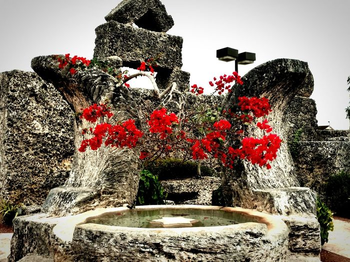 Coral Castle  Structure Flowers