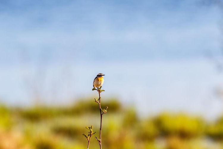 Close-up of a bird on a flower