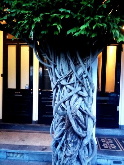Amsterdam Amsterdamcity Plant Door Tree Architecture Close-up Built Structure Building Exterior