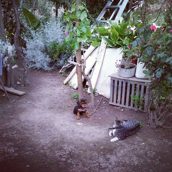 Perrito y Gatito ??
