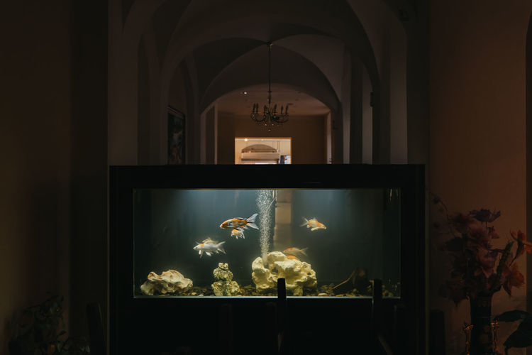 View of fish swimming in glass window