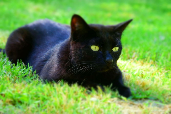 Black Cat Black Cats Cat Cat Photography Cats Cats Photography