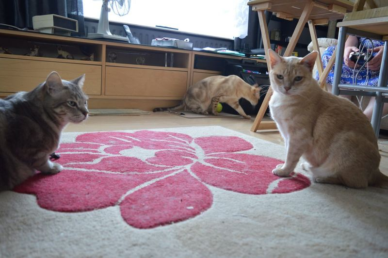 Trio Of Cats