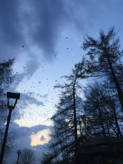 Sky Bird Flying