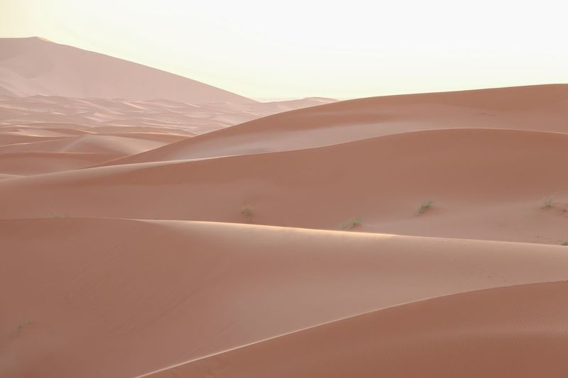 rose pink Curves And Lines Curve Softness Sahara Sand Dune Desert Land Scenics - Nature Landscape Sand Arid Climate Environment Non-urban Scene No People Beauty In Nature Day