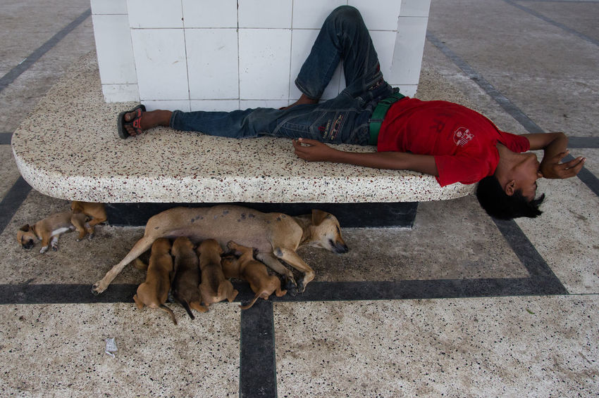 Untitled Day Domestic Animals Full Length Lying Down Men One Person People The Street Photographer - 2017 EyeEm Awards