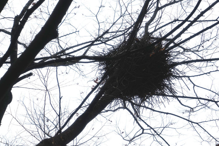 Bare Tree Beauty In Nature Branch Close-up Day Dead Tree Dried Plant Low Angle View Nature Nest No People Outdoors Sky Tree