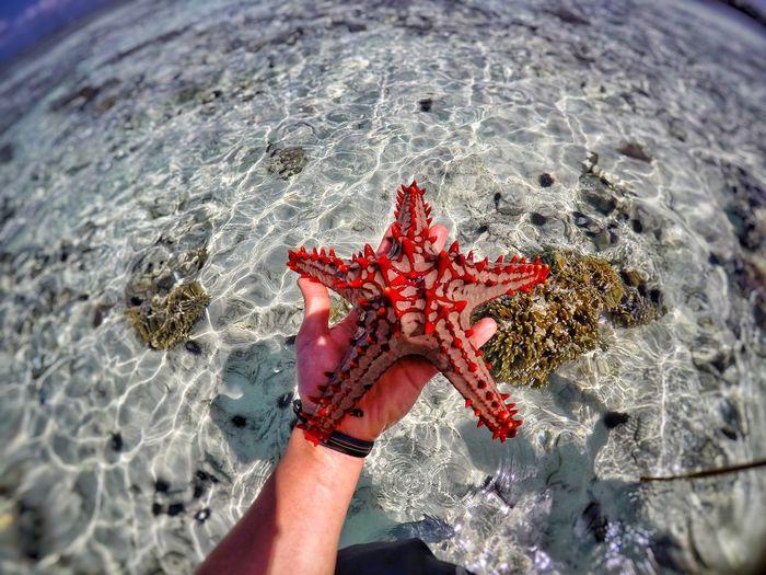 Man holding a starfish