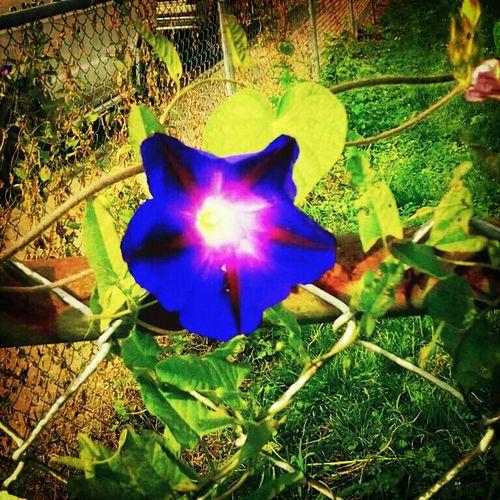 Flowerporn .. AMPt_Nature ... SAMSUNG ...3MP.........