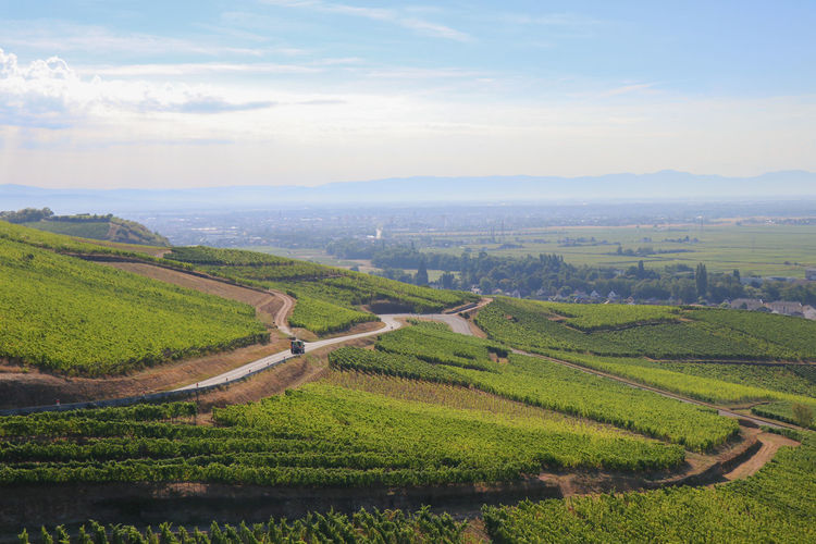 Vineyard Alsace Agriculture Beauty In Nature Cloud - Sky Crop  Day Environment Farm Field Green Color Growth Land Landscape Nature No People Outdoors Plant Plantation Rural Scene Scenics - Nature Sky Tranquil Scene Tranquility Vineyard Winemaking