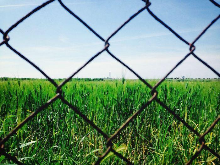 Taking Photos Green Landscape Escape