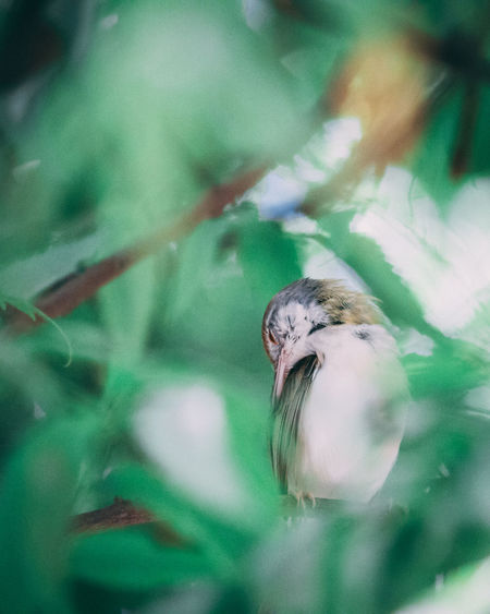 Selective Focus Animal Themes Animal One Animal Close-up No People Animals In The Wild Animal Wildlife Day Plant Bird Nature Vertebrate Growth Beauty In Nature Outdoors Green Color Focus On Foreground Freshness Fragility