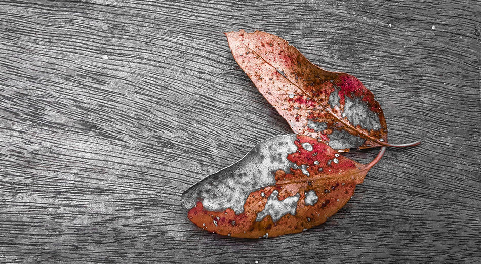 High Angle View Red Close-up No People Full Frame Crime Scene Indoors  Day Rotting Tranquil Scene Darkness And Beauty Black And White Gallery_of_all Darkness And Light Plant Petal Textured  Artofvisuals Art Photography ArtWork