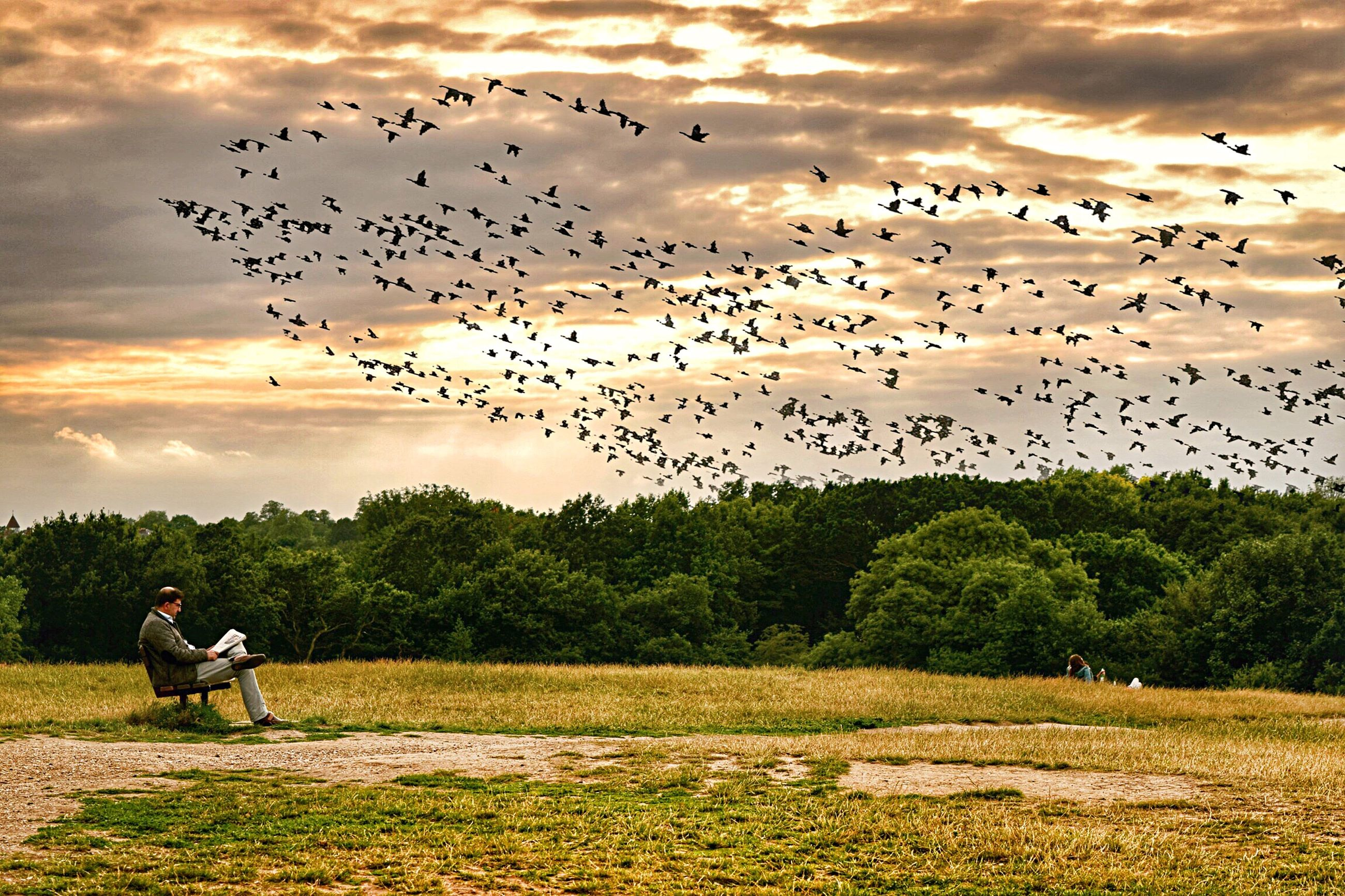 bird, large group of animals, flying, flock of birds, animals in the wild, sunset, sky, animal wildlife, nature, mid-air, beauty in nature, togetherness, cloud - sky, migrating, real people, scenics, full length, field, motion, landscape, outdoors, men, tree, grass, spread wings, mammal, day, people