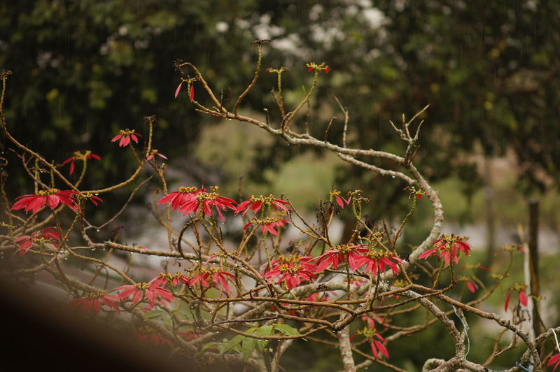 Beauty In Nature Branch Close-up Day Growth Nature No People Outdoors Plant Red Tree