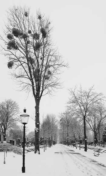 Cemetery Cemetery Photography Blackandwhite Bnw_collection Streetphotography Vienna Wien vanishing point Nature_collection Snowy Trees Winter Snow Cold Temperature Tree Bare Tree Outdoors Nature Branch Sky No People Landscape Clear Sky Beauty In Nature Snowing Scenics