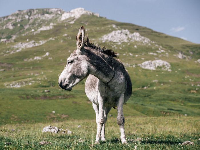 Donkey standing on grassy field