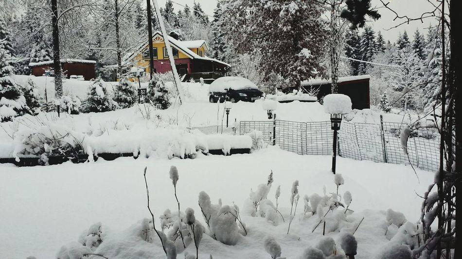 Woke up today to a fantastic winter wonderland. Taking Photos Snow ❄ Walking Around Winterwonderland