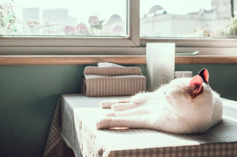 Lazy weekend's morning Calm Cat Domestic Animals Domestic Cat Home Lazy Leisure Activity Mammal Morning Pets Resting Safe Safety Sunny Warm Weekend The Essence Of Summer