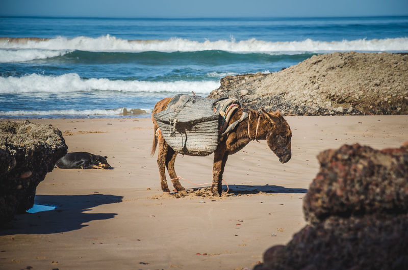 View of horse on beach