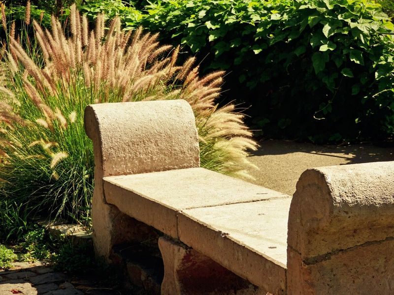 Good afternoon Plant Seat Concrete Seating Concrete Seat Garden Escene Plant Garden Timothy Grass Beautiful Garden Tranquility Scene Tranquility Moments Cozy Place Tranquil Nature Scene Sweet Place Differents Textures Scenics Garden Seat