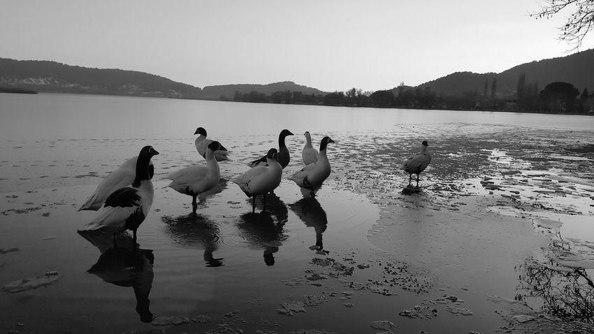Duck Lake Ordek Göl Golcuk Odemis Izmir Cold Turkey Ig_izmir