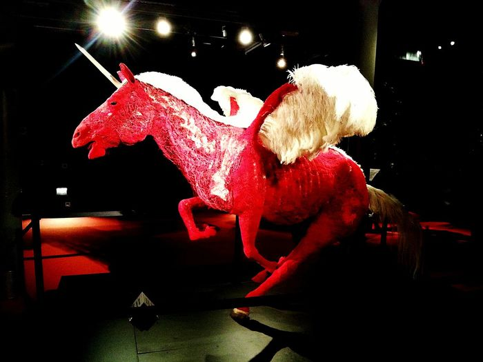 Plastinarium Guben Art Deutschland Horse