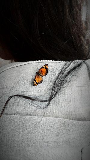 Lieblingsteil Borboletas Buttetfly 🎈👻