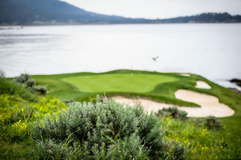 Pebble Beach Beauty In Nature Bigtomphotography Golf Landscape No People Pacific Ocean Seagull Tranquil Scene Woodenpost
