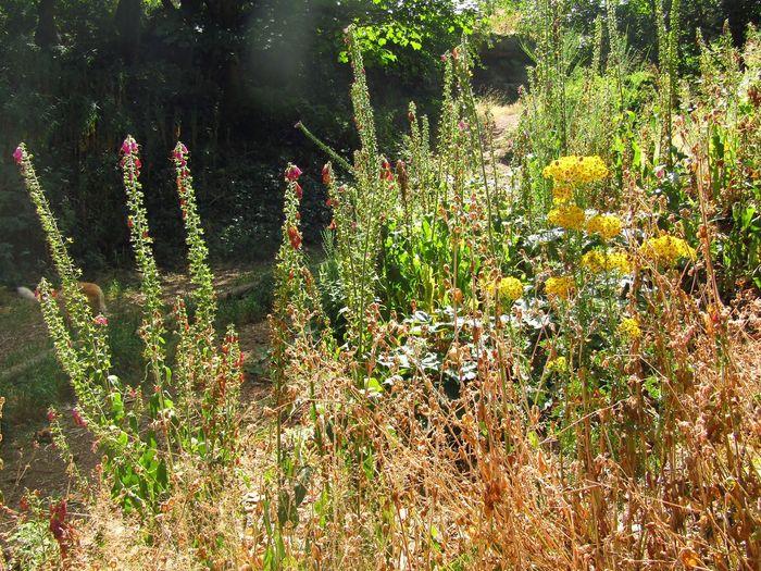 Flowers & Grass