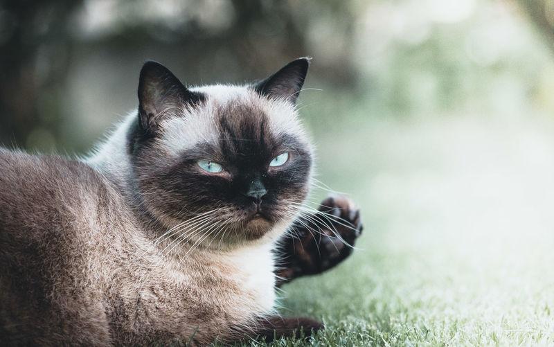 Close-up portrait of cat on grass