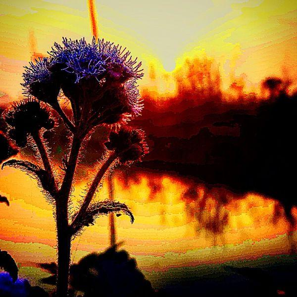 Flower Sunrise