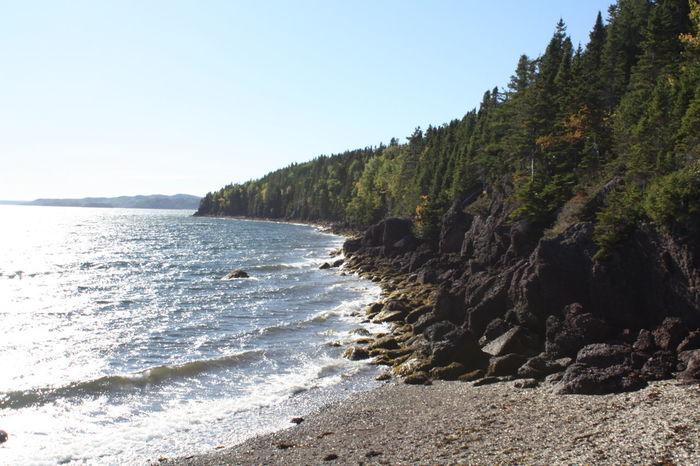 Evergreen Tree Newfoundland Newfoundland, Canada Beach East Coast Seaside Summer