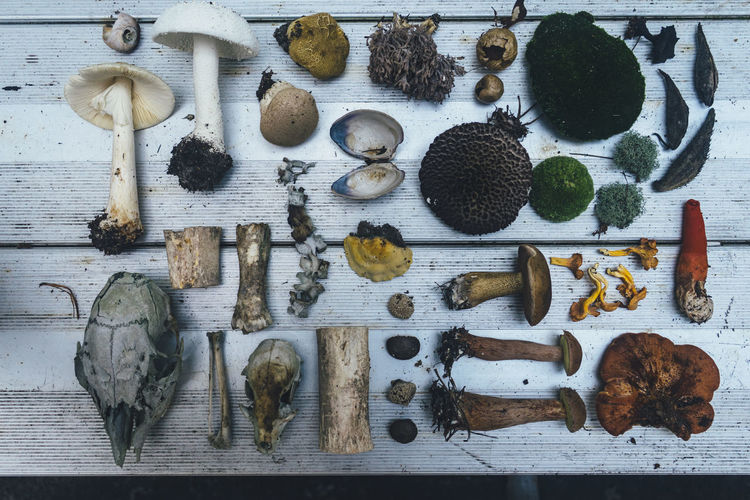 mushrooms and treasures Variation Choice Directly Above Indoors  Large Group Of Objects No People Arrangement High Angle View Still Life Table Food Food And Drink Wood - Material Collection Work Tool Vegetable Side By Side Group Of Objects Abundance Equipment