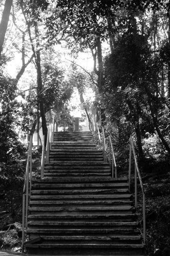Urbanismo Escada Nature