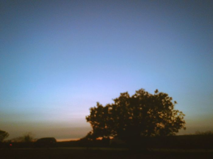 Tree Silhouette No People Landscape Sunset Day Blue Beauty In Nature Outdoors Nature Sky Scenics Rural Scene
