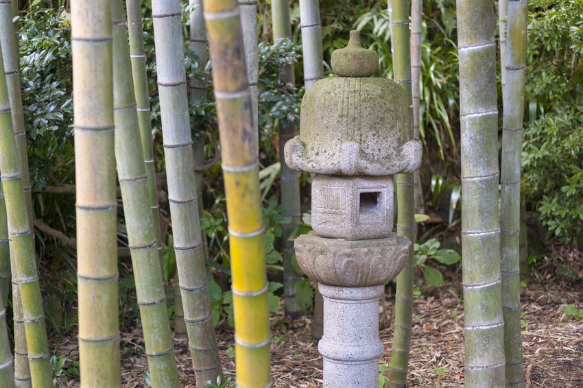 Japanese Garden Temple Of Japana Architectural Column Art And Craft Bamboo - Plant Day Focus On Foreground Forest Growth Human Representation Land No People Outdoors Plant Religion Representation Sculpture Spirituality Statue Tree Tree Trunk Trunk α900
