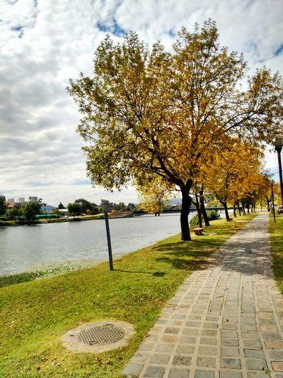 Autumn Nature Sunny☀ Trees