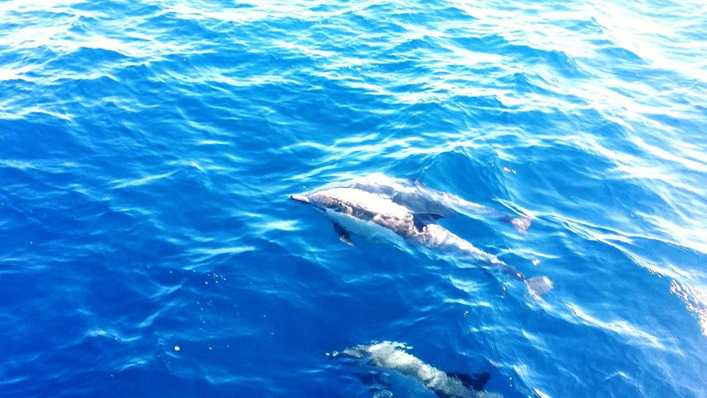 Dolphins Sea November Saturdaymorning Family Time Animals Long Beach California Blue Water Had Fun Beautiful Animals