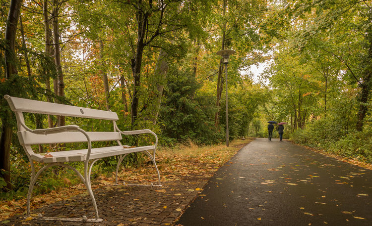 Autumn Autumn colors Herbst Herbststimmung Spaziergang Durch Den Herbst. Green Color Growth Outdoors Plant Regen The Way Forward