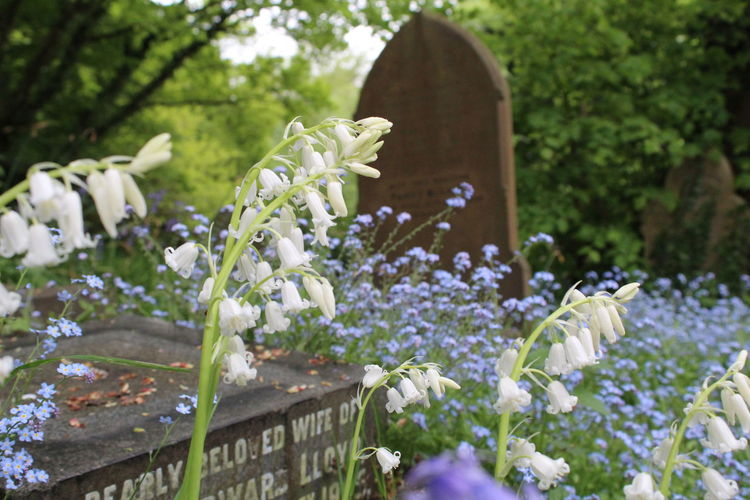 Graveyard Grave