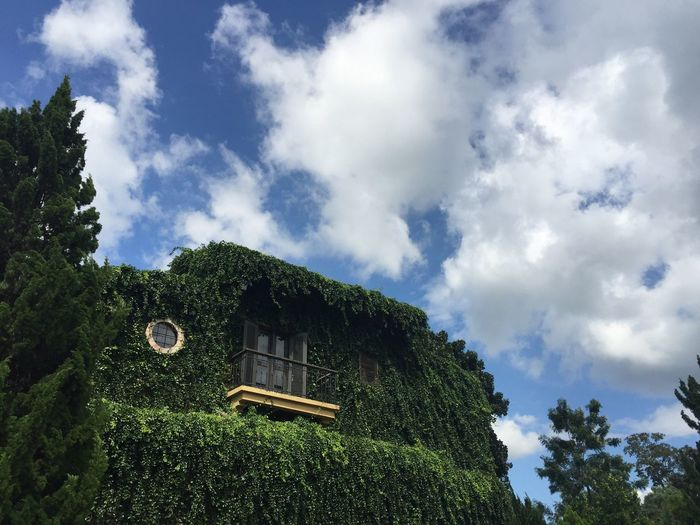 Between exterior and nature Cloud - Sky Plant Sky Tree Architecture Low Angle View Visual Creativity Nature Built Structure Day No People Building Exterior Outdoors Green Color House Building Beauty In Nature Visual Creativity