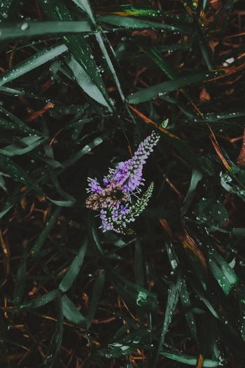Plant Flower Growth Flowering Plant Beauty In Nature Nature Fragility Purple Vulnerability  Plant Part Leaf Freshness No People Day High Angle View Close-up Outdoors Green Color Water Land
