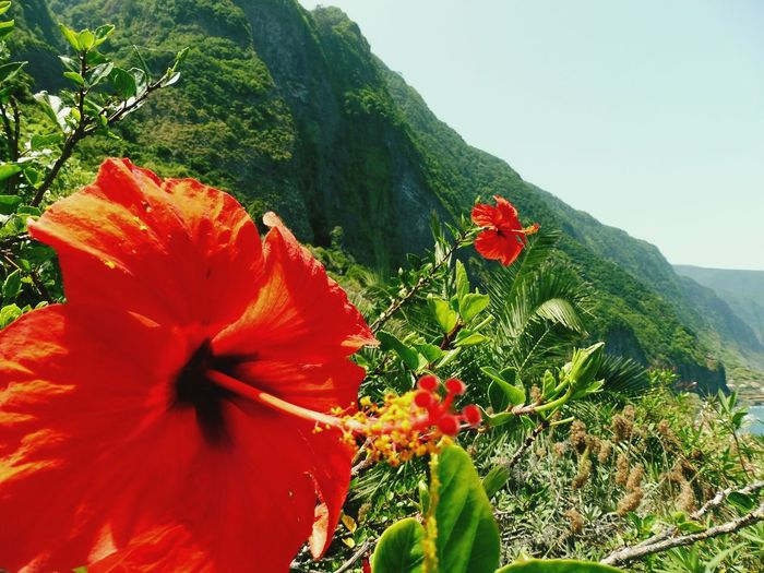 Flower in Madeira, Portugal Madeira Madeira Island Portugal Island Flower Flowers Nature Green Trees Trees And Sky Growth Plant Plants Himmel Pflanzen Natur Beauty In Nature Blume Blumen Bäume Plants 🌱 Plants And Flowers Sky Blue Blue Sky