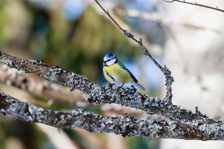 Close-up of bird perching on branch