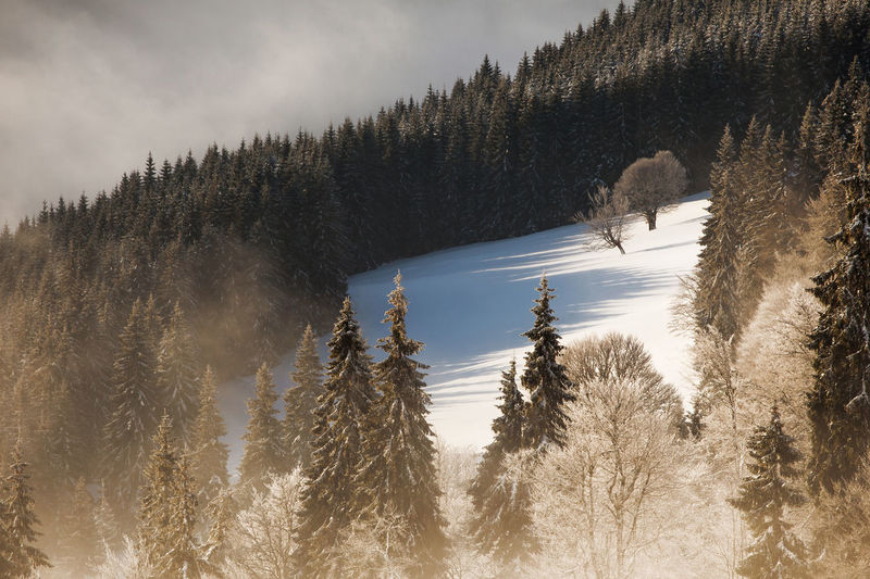 Winter landscapes with Rodnei Mountains, Romania. Alpine Ice Light Morning Nature Trees Weather Winter Beauty Beauty In Nature Cold Fog Foggy Forest Landscape Mist Mountain Pine Tree Scenics Season  Snow Sunrise Tranquil Scene White