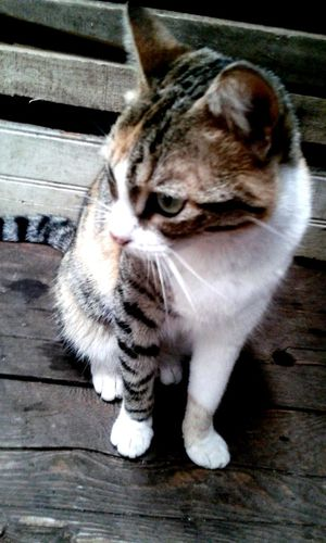 Feline Day One Animal Domestic Cat EyeEmNewHere My Cat ♡